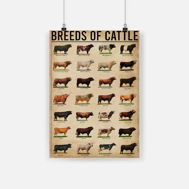 Breeds of cattle aberdeen angus beef shorthorn belgian blue poster 1