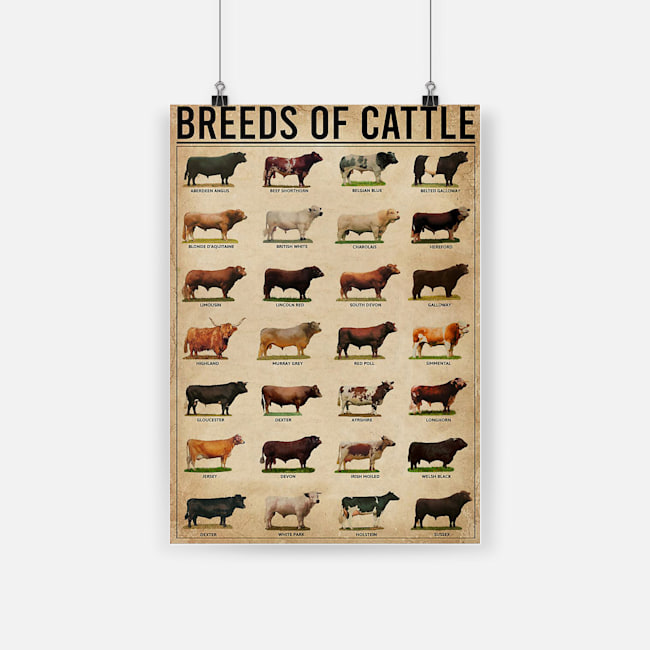 Breeds of cattle aberdeen angus beef shorthorn belgian blue poster 2