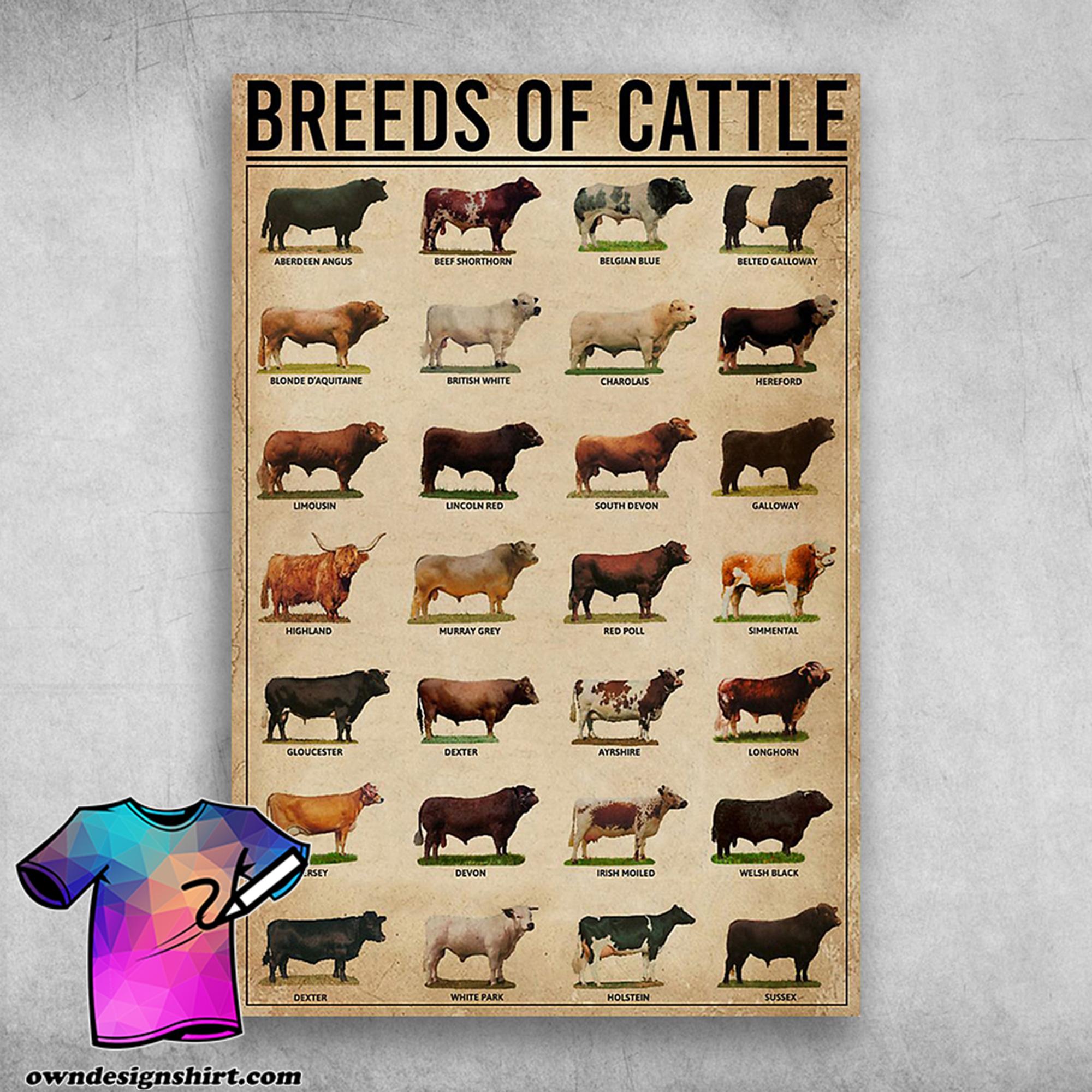 Breeds of cattle aberdeen angus beef shorthorn belgian blue poster