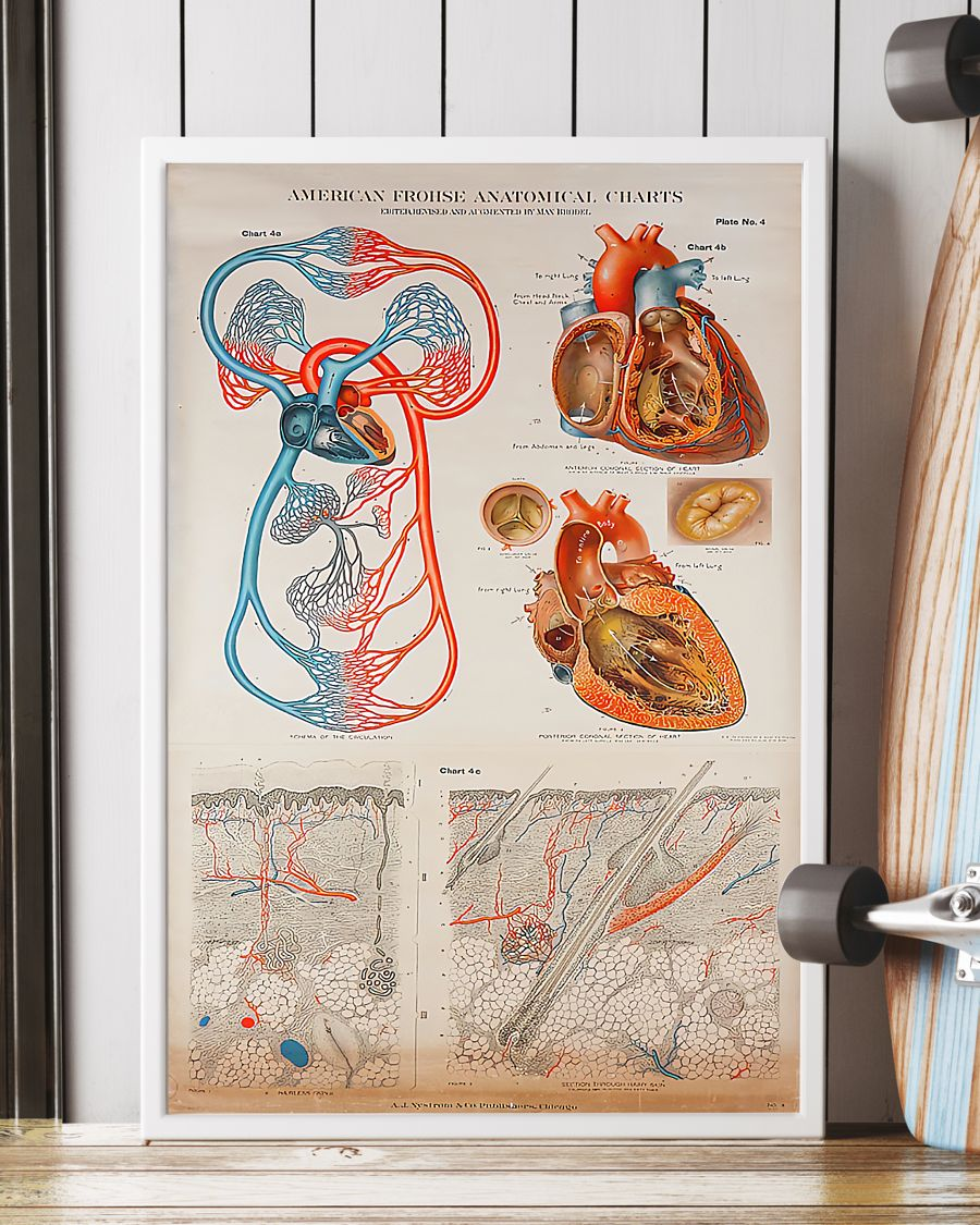 human heart anatomical cardiologist poster 2
