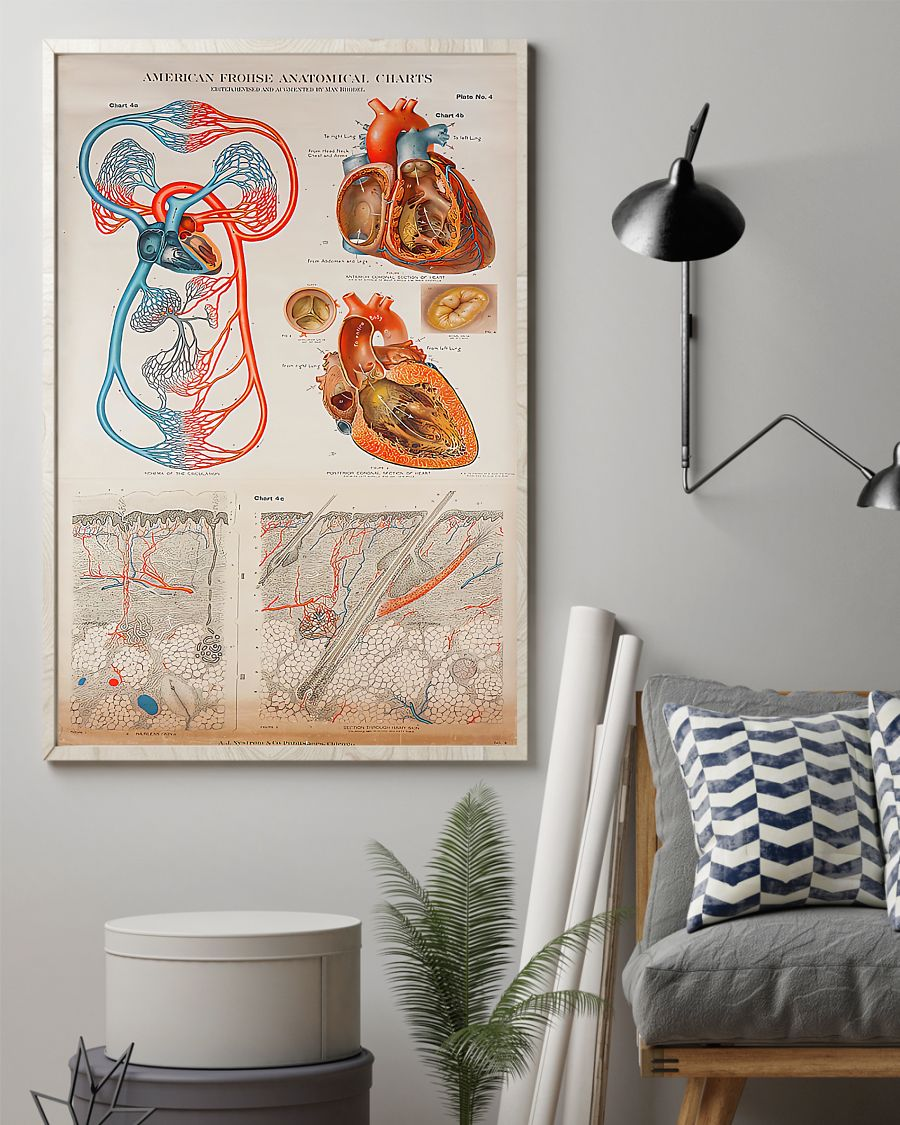 human heart anatomical cardiologist poster 4